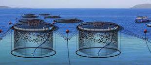 فروشگاه اینترنتی اسپلش پرورش ماهی با دسترسی راحت و ارائه مناسبترین قیمت ها، خریداران بسیاری را به سوی خود جذب نموده است.